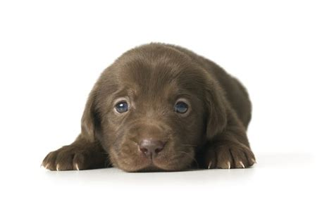 how before puppies open how should a puppy be to for an underground