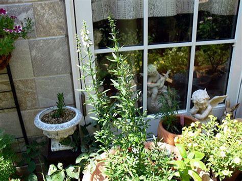 office herb garden ステラ マリス ナディア オフィスの園芸療法 開運ガーデニング講座