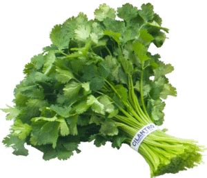 Cilantro And Chlorella Detox Side Effects by Are Toxic Glyphosates In Your Food An Important Warning