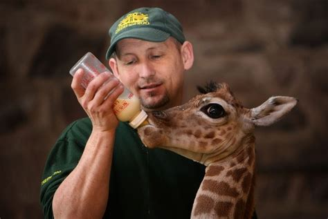 Zoo Keeper by Do You Sales Hunters Or Zookeepers Mike Weinberg The New Sales Coach