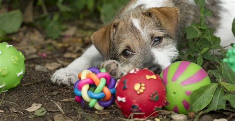 how to keep a puppy busy puppy smarts puppy