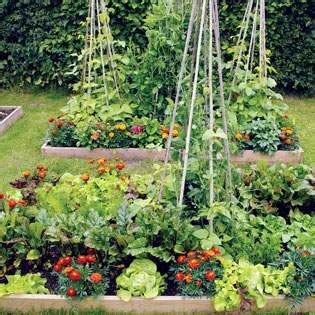 Intensive Vegetable Gardening Intensive Gardening Grow More Food In Less Space With