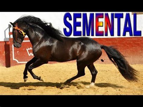 caballo y muchacho el caballo negro el semental salvaje pelicula para ni 241 os completa en espa 241 ol youtube