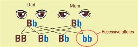 inheritance pattern of brown eyes what is genetic inheritance