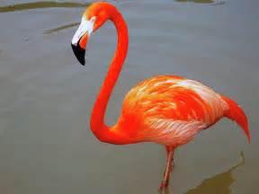 Flamingos drusillas zoo park blog uk best small zoo attraction