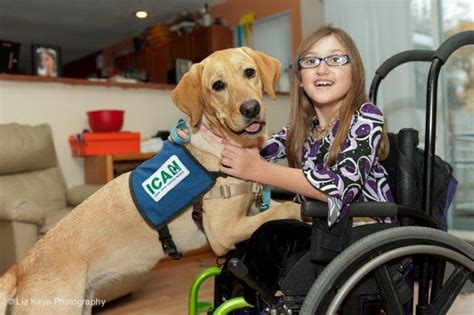 assistance dogs what is a service or assistance the league