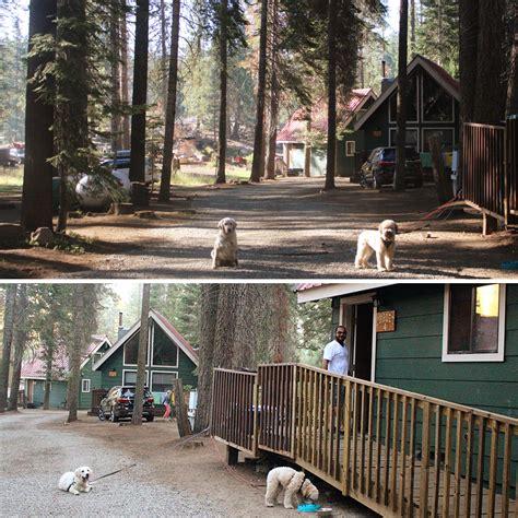 Friends At Cabin Creek by Last Summer Hurrah At Dinkey Creek Secret Josephine