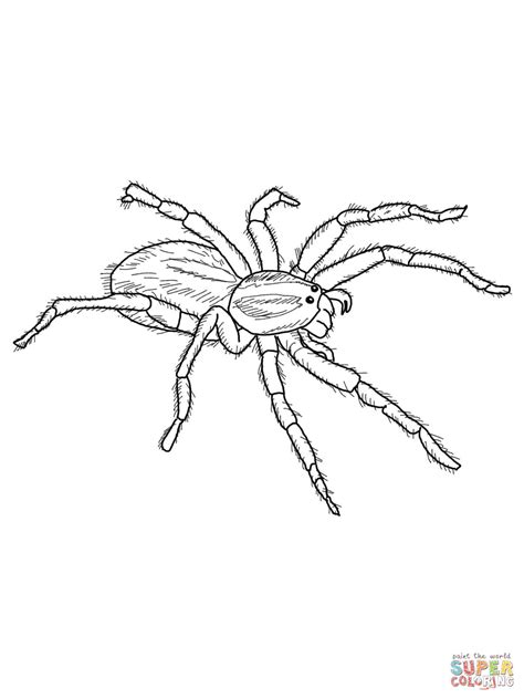spider coloring pages spider coloring pages printable coloring home