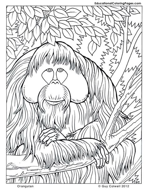coloring book for adults indonesia trees coloring pages educational coloring pages