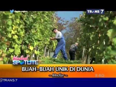 Bibit Mangga Alpukat Di Pasuruan buah mangga harum manis perlis harumanis agro jurnal doovi