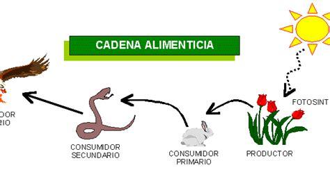cadenas troficas para niños 191 c 243 mo se alimentan los seres vivos organismos heter 243 trofos