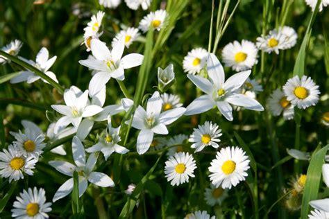 fiori prato panoramio photo of e primavera fiori di prato