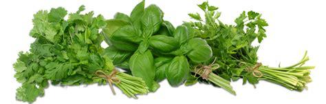 Organic Indoor Herb Garden - indoor herb garden ideas baking naturally