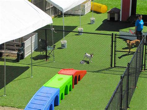 dog playground equipment backyard image gallery outdoor dog playground