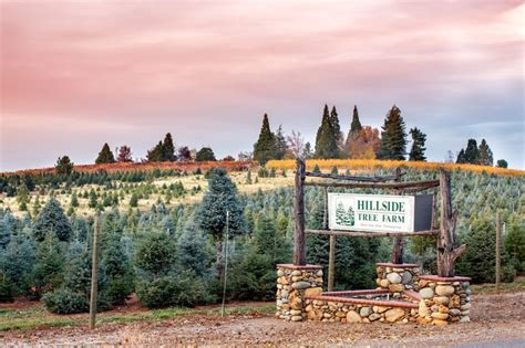 christmas tree permits in el dorado ca come cut your own tree at hillside tree farm apple hill el dorado county ca apple
