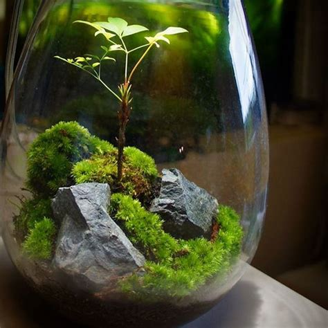 6 reasons why you want to garden in terrarium avoid these mistakes perfect plants