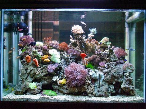 5 Makanan Ikan Hias tips merawat akuarium air laut
