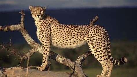 Animal World 5 beautiful animals safaris world s most dangerous