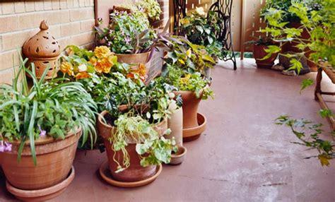 innaffiare fiori vacanza piante in vacanza guida alla loro sopravvivenza leitv