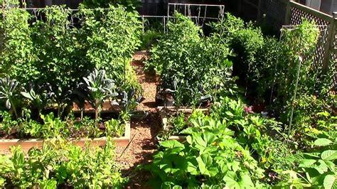 grow  lot  food   small garden  ez tips