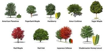 Type Of Trees by Gallery For Gt Kinds Of Trees