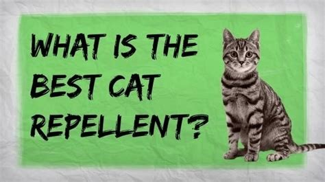 how to get rid of cats in backyard how to make a homemade cat repellent home remedies for