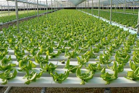 Hydroponics Farming Information guide   Agrifarming.in