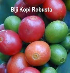 Kopi Biji Robusta Djempol 1 Kg anim agro technology kopi jenis robusta