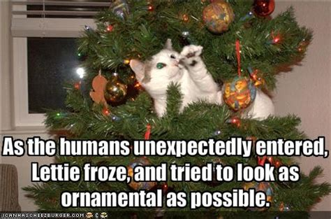 funny cats in christmas trees griffin s cat urday cats