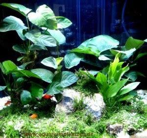 Nano Aquarium Pflanzen by Nano Aquarium Pflanzen Set Bepflanzung Einfach Gemacht