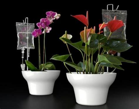 pflanzen im urlaub bewässern tipps wie sie w 228 hrend des sommerurlaubs die pflanzen