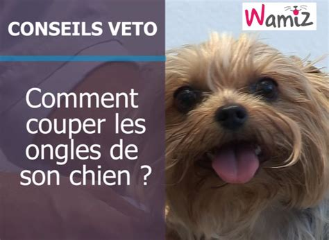 coupe ongle chien coupe ongle chien