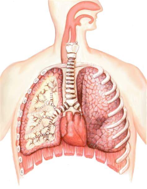 imagenes niños con cancer imagenes de los pulmones myideasbedroom com