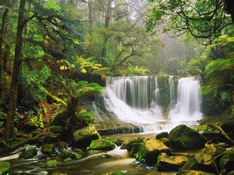 waterfall rocks moss green forest tree fern australian rainforest desktop wallpaper hd