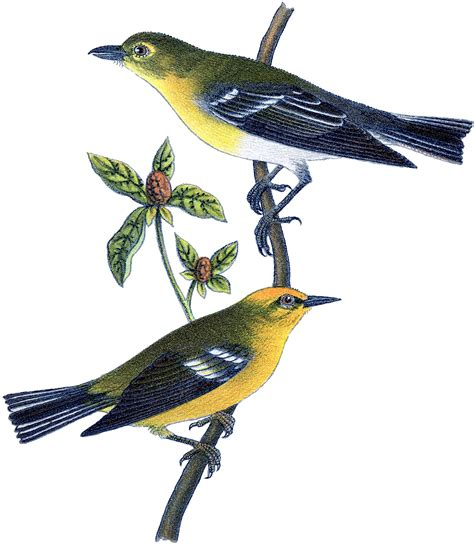 yellow birds picture the graphics fairy
