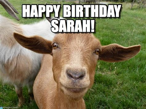 Happy Goat Meme - sarah s birthday goat happy birthday sarah on memegen