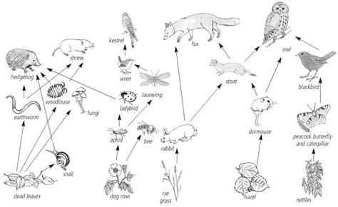 barn owl food web diagram 9 best images of food web diagram worksheet food web