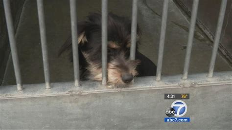 orange county pound grand jury report orange county animal shelter plagued by deplorable conditions