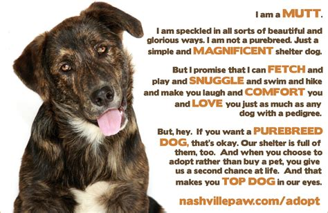 puppy adoption nashville adopt nashville paw