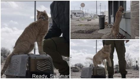 skidmark  fear  walking dead  memes reactions
