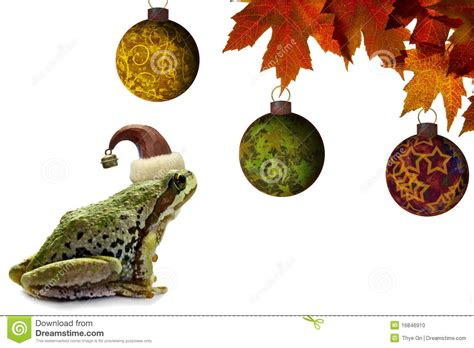 christmas tree frog sitting with red maple leaves stock