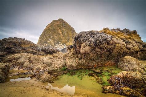 haystack rock tide pool photograph by joseph bowman