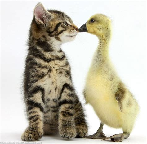 worldwide puppies and kittens tiny kittens cuddly puppies and fluffy ducks pair up for photo shoot daily