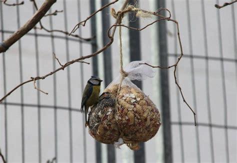 comedero para aves natural y biodegradable duendevisual nidos y comederos urbanos para aves eroski consumer
