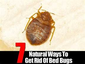 bed bugs how to get rid of them 7 ways to get rid of bed bugs