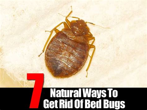 7 ways to get rid of bed bugs