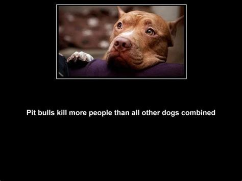 pitbull facts 205 best we need bsl images on