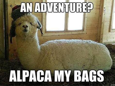 Funny Pun Memes - just some animal pun memes memes