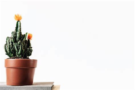tavolo fiore foto gratis fiore libro botanico cactus tavolo fiore