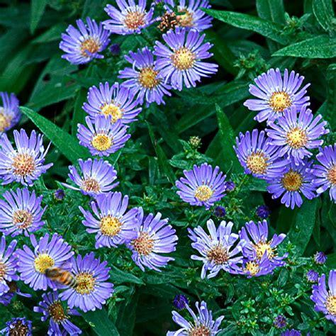 Summer Garden Flowers 9 Easy Summer Flowers Sunset Magazine